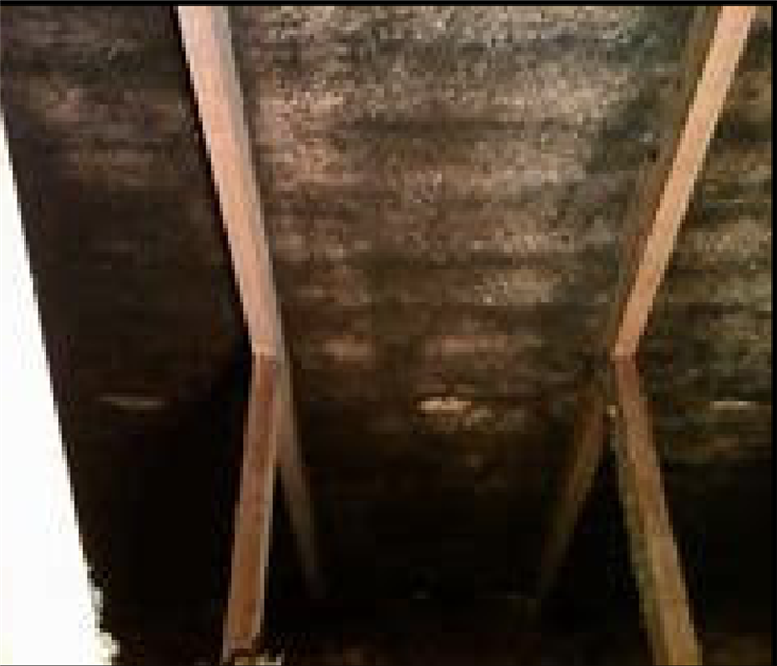Attic Mold in Burriville, RI Before