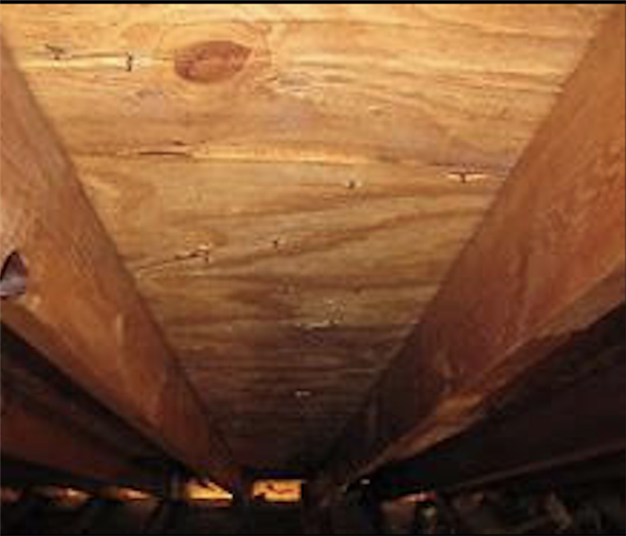 Attic Mold in Burriville, RI After
