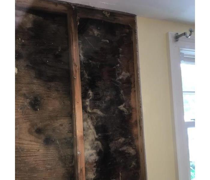 Mold Wall Damage
