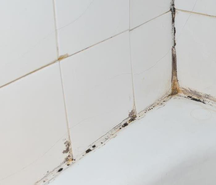Mold Remediation What Causes Mold Growth?