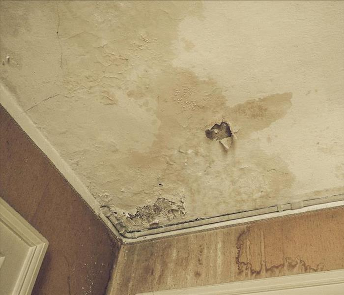 Mold Remediation 3 Steps You Can Take To Control a Mold Problem in Your Home