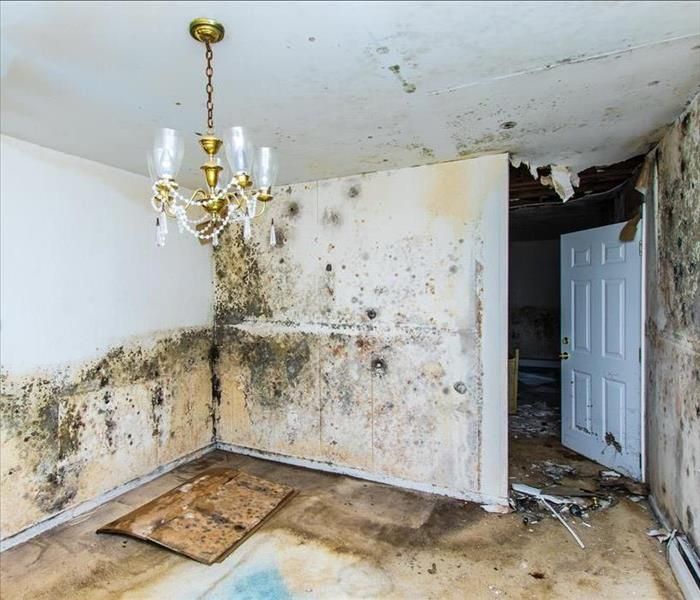 Mold Remediation The Persistence Of And Necessity Removal Infestation